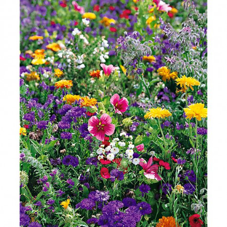 prairie fleur mellifères